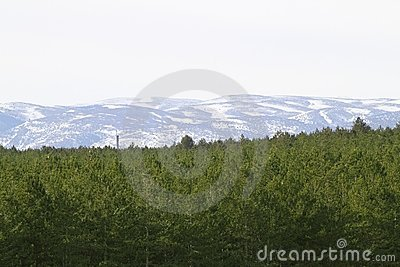 Teruel province snow mountain pine forest