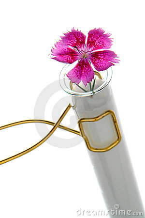 Test Tube Flower Experiment Isolated