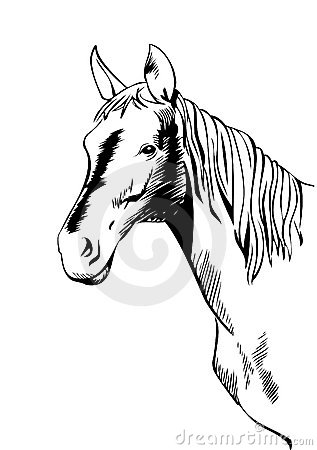 Testa di cavallo stilizzata fotografie stock immagine for Cavallo stilizzato
