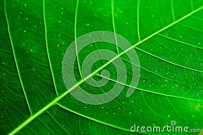 Testes padrões da folha