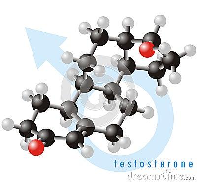 Testosterone molecule 2