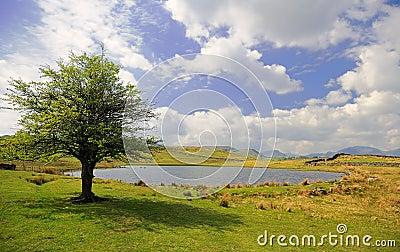 Tewet Tarn, Lake District, Cumbria