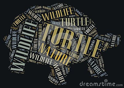 Textcloud of turtle