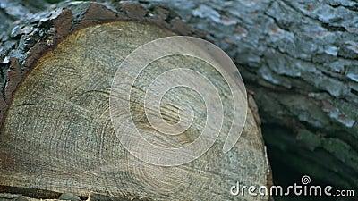 Textur snitt av ett träd stock video