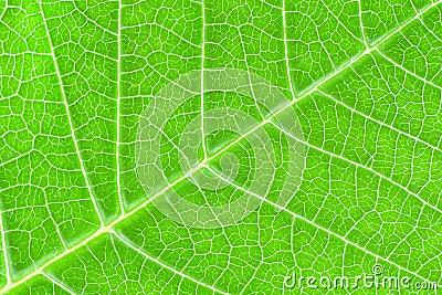 Textura da folha