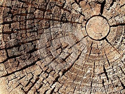 Textura de madeira velha dos anéis de árvore