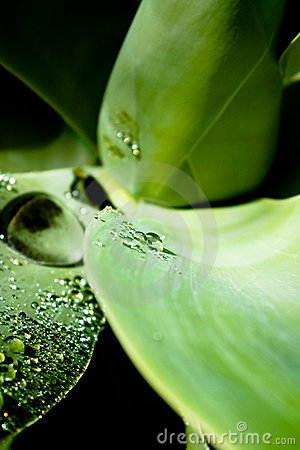 Textura de uma folha com gotas da água