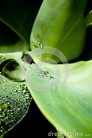 Textura de una hoja con gotas del agua