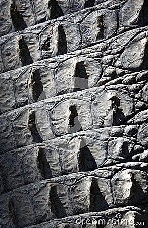 Texture - Crocodile Skin