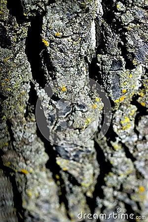 Texture d arbre