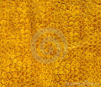 Texture de cuir de serpent de plan rapproché