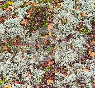 Texture of the earth and moss