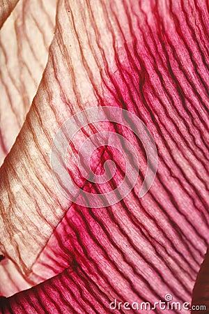 Texture of flower petal