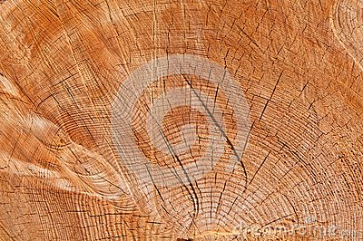 Texture Of Frame Of Tree Stock Photos - Image: 25123293