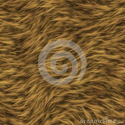 The texture of fur of a lion.