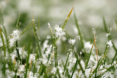 Texture of grass with snow