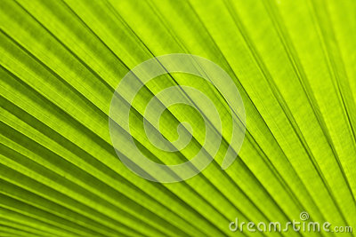 A green leaf as background