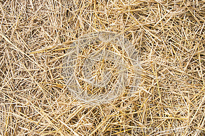 Texture hay closeup in color. Stock Photo