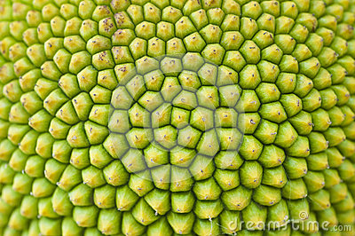 Texture of a Jack fruit