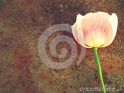 Texture Metal And Pink Flower Background Stock Photo ...  Texture Metal A...