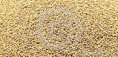 Texture of millet