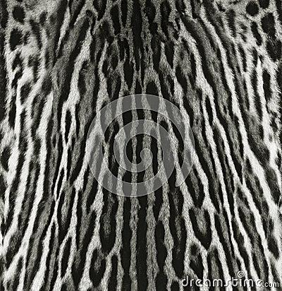 Ocelot fur texture
