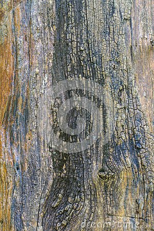 Free Texture Of Bark Wood Royalty Free Stock Photography - 101978107