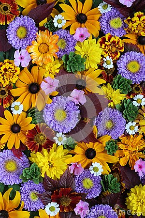 Free Texture Of Different Fall Flowers, Top View. Flower Background. Stock Photography - 108501662