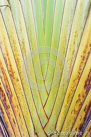 Free Texture Of Tree Bark. Stock Image - 60066131