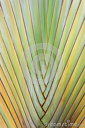Free Texture Of Tree Bark. Royalty Free Stock Photos - 61756558