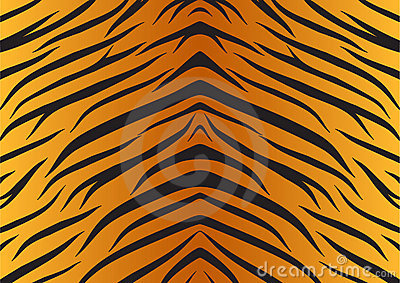 Texture skin tiger animals fur