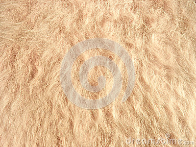 Texture of soft beige fleecy fabric