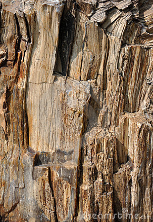 Texture of surface of fossil wood