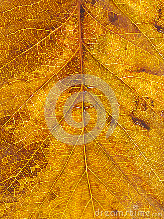 Texture tree leaf fall