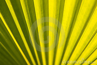 Texture of tropical leaf
