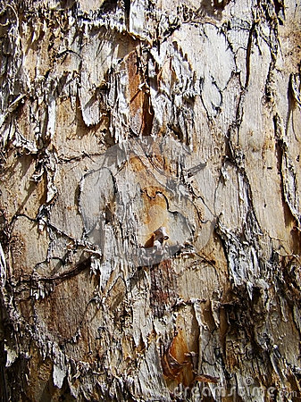 Texture of trunk with damaged bark