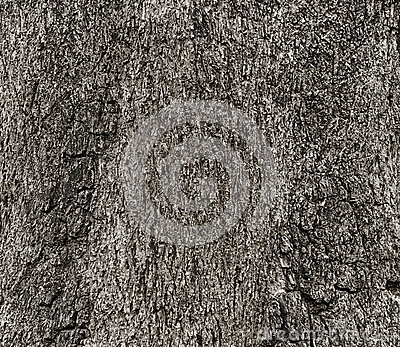 Texture of a wood from tree, Black and white tone Stock Photo