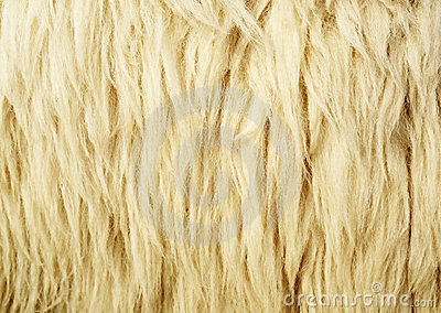 Texture of Wool
