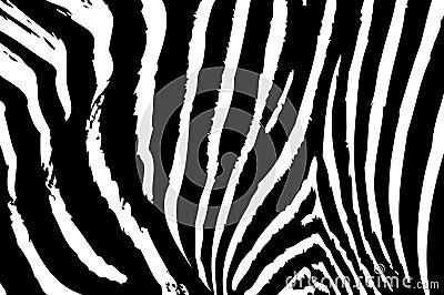 Texture of zebra skin