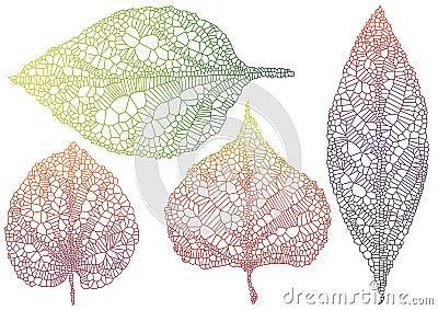 Textured autmn leaf