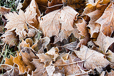 Textured background of a fallen leafs