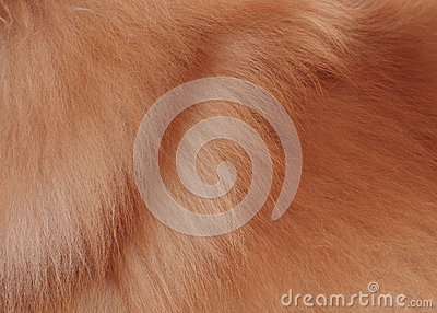 Textured dog brown hair background