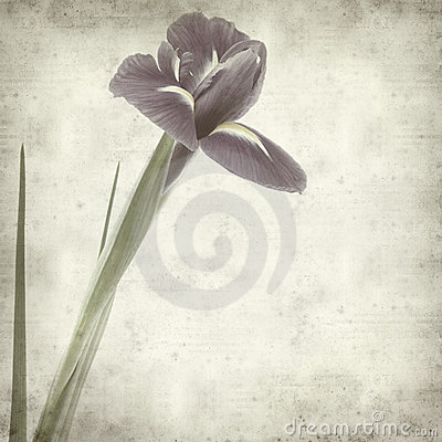 Textured old paper background with iris