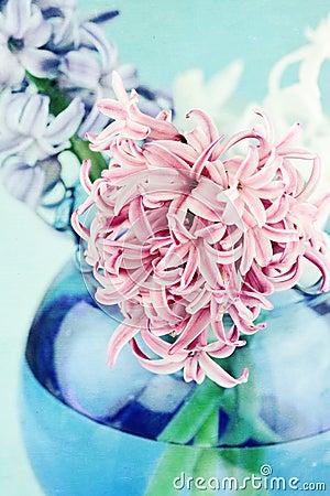 Textured Pink Hyacinth