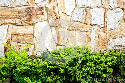 Textured stone wall and plants