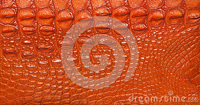 Texturerat krokodilläder