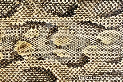 Textures - Snakeskin #1
