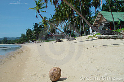 Thai beachfront with coconut