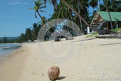Thai beachfront with coconut