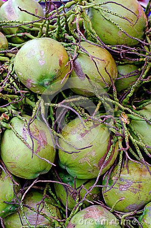 Thai coconuts in Thailand.